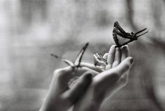 """Denise Levertov: """"A Gift"""" you are given the questions of others to hold in the emptiness of your hands, songbird eggs that can still hatch if you keep them warm, butterflies opening and closing themselves in your cupped palms, trusting you not to injure"""