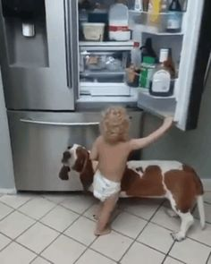 Discover & share this Paulo Ferreira Giphy Channel GIF with everyone you know. GIPHY is how you search, share, discover, and create GIFs. Funny Kids, Funny Cute, The Funny, Hilarious, Funny Animal Memes, Funny Animals, Cute Animals, Funny Memes, Dog Memes