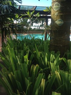 I love the simple greenery around the pool ... Would definately love something simple like this. It looks like a tropical getaway that can be achieved just about anywhere ( provided the funds are available ). ;-)