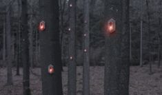 Pixi – Nature aware, self-sufficient, digital organism 'breathes' in the forest / @werccollective