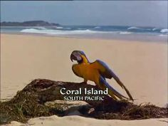 Papoušek a poklad - celý film, CZ dabing, komedie, dobrodružný, pro děti (1998) - YouTube South Pacific, Coral, Youtube, Youtubers, Youtube Movies
