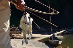 Golden Dorado@Tsimane lodge-Fernando Beltran photography. - Faraway Fly Fishing