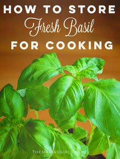 how to store fresh basil for cooking - love this