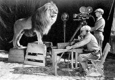 rugido do leão da MGM 20 raras fotos históricas que você provavelmente nunca viu