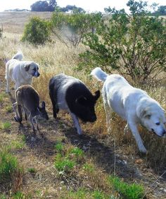 All walks of life on their daily walk near Port Lincoln Eyre Peninsula Australia's Seafood Frontier