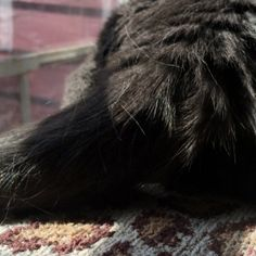 Tails up! NouNou the one-eyed cat loves grooming time with her windshield wiping tail! #cats