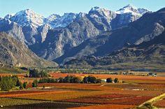Otoño en el Hexriver valley by Hardus Lategan on 500px #vino #sudafrica #catalo