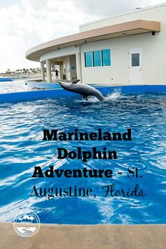 Our Dolphin Encounter at Marineland in St Augustine Florida - We were so grateful for this opportunity to visit Marineland near St. Augustine, Florida. We were able to do different things with the dolphin. Take a look at the overall result of our experience!