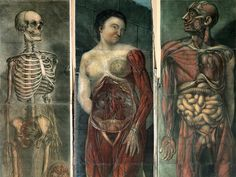 Awesomely Gross Medical Illustrations From the 19th Century | Science | WIRED