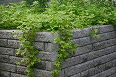 Brighten Your Day, Greenery, Flora, Planters, Herbs, Garden, Walls, Beautiful, Garten