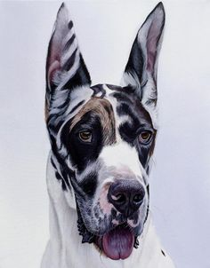 """""""Bullet"""", x oil on canvas, Private collection Animal Paintings, Animal Drawings, Dog Drawings, Art Challenge, Dog Portraits, Dog Art, Illustrations, Pet Dogs, Art Gallery"""