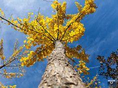 Autumn Tree Photo. Fall Season Print. by FineArtGalleryPrints