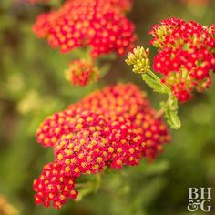 When summer heat kicks in, rely on these drought-tolerant plants to hold their own -- and still look beautiful.