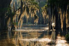 Photo about Spanish moss in the Louisiana Bayou. Image of countryside, swamp, bayou - 54666892 Cthulhu, New Orleans Bayou, Bayou Country, Louisiana Swamp, Monroe Louisiana, Lake Pontchartrain, Past Life Regression, Most Romantic Places, Beautiful Places