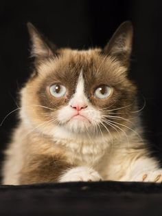 """Cute article about Tardar Sauce, """"Grumpy Cat saunters into town to pitch movie"""" Nov 2014 - read more here: http://www.usatoday.com/story/tech/2014/11/21/grumpy-cat-holidays-union-square/19371389/ #GrumpyCat #Tard #TardarSauce"""