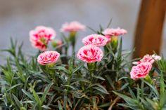 Daddy's neatness | Fashion Vintage Blogger  #tea set #daddysneatness #atelierdreamshabbychic #pashionvictim #doudoubracelets #shabbystyle #garden #flowers  http://www.daddysneatness.com/2014/06/atelier-dream-shabby-chic.html