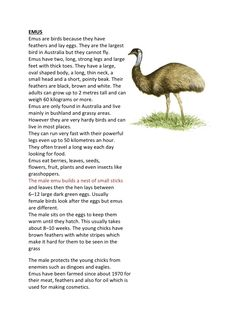 EMUS Emus are birds because they have feathers and lay eggs. They are the largest bird in Australia but they cannot fly. E...