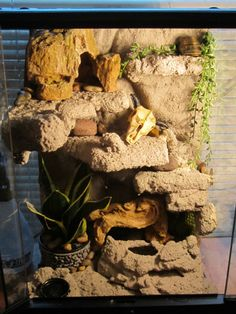 how to clean a leopard gecko tank