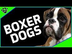 Wie Boxer an einem Tag abnehmen