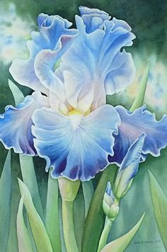 Moonlit Dance by Jean Weiner Watercolor ~ x This watercolor was sent to us by Jean Weiner. It is on a full sheet of Arches paper and painted with Holbein watercolors. The title is Moonlit Dance. Cheap Joe's Art Stuff offers discount prices on art supplies Watercolor Flowers, Watercolor Art, Iris Art, Iris Painting, Flower Artwork, Paintings Of Flowers, Iris Flowers, Arte Floral, Botanical Art