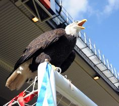 Kayla our Eagle #cpfc