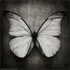 photo:  The Butterfly
