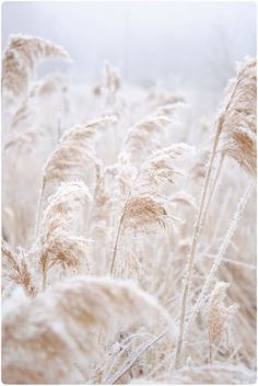 This Spring is all about subtle hues of white, cream and light beige, but with major texture - Photography Subjects Nature Photography Flowers, White Photography, Colour Photography, Flowers Nature, Photography Accessories, Nature Plants, Summer Photography, Iphone Photography, Photography Ideas