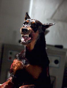 Resident Evil: Apocalypse - Publicity still Black Doberman, Doberman Love, Beauceron Dog, Dobermans, Pochette Cd, Animals And Pets, Cute Animals, Scary Dogs, Doberman Pinscher Dog