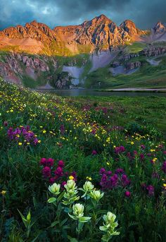 Guy Schmickle ~ Wildflowers in Clear Lake Basin, Rocky Mountains, Colorado ~ Summer Wildflowers of Colorado's San Juan Mountains-SR Rocky Mountains, Colorado Mountains, Beautiful World, Beautiful Places, Landscape Photography, Nature Photography, Photography Tips, Photography Courses, Photography Colleges