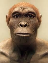 HOMO HABILIS:Homo habilis (del latín homo, 'hombre', y habilis, 'hábil') es un homínido extinto que vivió en África, en las edades Gelasiense y Calabriense (principios y mediados del Pleistoceno), entre 2,5 y 1,5 millones de años atrás.