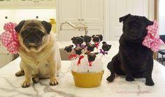 Pug cake pops.. Pugty time!!!