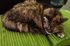 Lola taking a siesta by Scott Beale, via Flickr