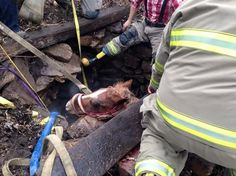HOrse rescue attempted - fails - getting horse out of a well at NOTL in Ontario, Canada.