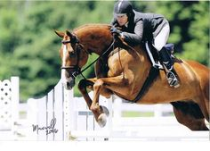 hunter jumper horse pictures | West Virginia Hunter Jumper Horse Training ~ 1 choices