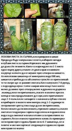 (3) Facebook Pickles, Sprouts, Cucumber, Memories, Vegetables, Memoirs, Souvenirs, Vegetable Recipes, Pickle