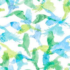 lorakeet wallpaper