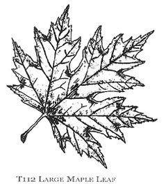 Large Maple Leaf