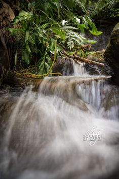 Hilo Hawaii #visionsbycarolphotography Waterfall, Artist, Photography, Outdoor, Outdoors, Photograph, Artists, Fotografie, Waterfalls