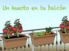 Cómo hacer un huerto en casa o en tu departamento Growing Succulents, Small Succulents, Growing Plants, Planting Succulents, Planting Flowers, Balcony Garden, Garden Planters, Herb Garden, Planter Pots