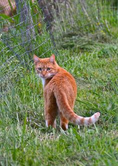 Fire where wood burns : small prey hunter she cat expecting tigers kits