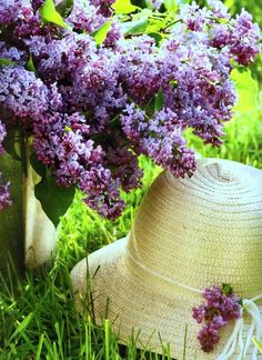 In the garden--lilacs-- oh how I miss them in the spring.  The fragrance is outstanding.