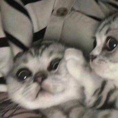 You will love these beautiful kittens. Cats are amazing creatures . - You will love these beautiful kittens. Cats are amazing creatures. Beautiful Kittens, Cute Cats And Kittens, I Love Cats, Kittens Cutest, Pretty Cats, Cute Baby Animals, Funny Animals, Cute Cat Costumes, Cute Cat Names