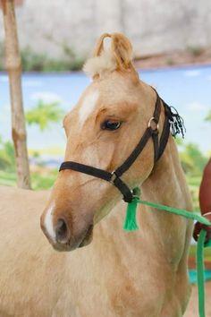 Kathiyawadi Horse, Palomino, Horse Breeds, Beautiful Horses, Marvel, Bike, Icons, God, Animals