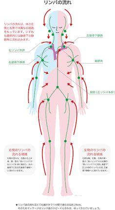 「鎖骨周り リンパの流れ」の画像検索結果