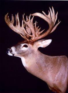 bryant Illinois buck