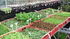 biologische tuin - Google zoeken
