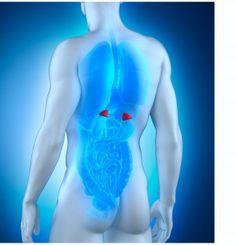 glandulas suprarrenales