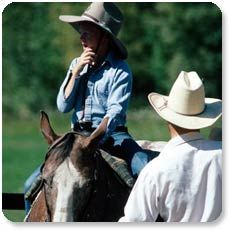 how to train horse skills