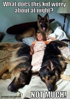 It's all about #GermanShepherds      #dogmemes #funnydogs  http://www.nojigoji.com.au/