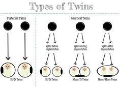 Types of Twins - Cold Coffee Blessings Types Of Twins, Boy Girl Twins, Girls, Fraternal Twins, Identical Twins, Twin Mom, How To Make Coffee, My Pregnancy, Mixed Babies